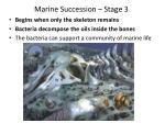 marine succession stage 3