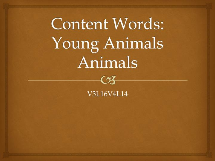 content words young animals animals n.