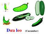 d a l eo cucumber