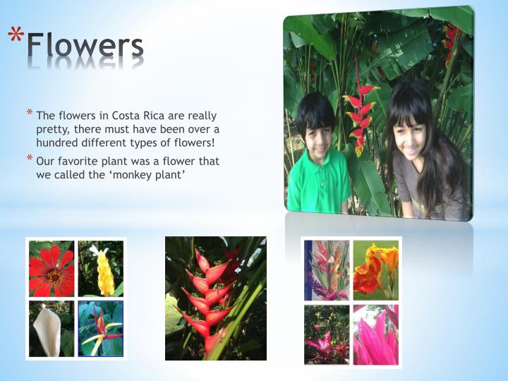 The flowers in Costa Rica are really