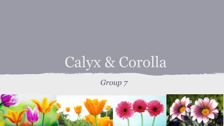 calyx corolla solution Calyx and corolla maria jose alvarez 1 compare structure of the value-added chain in calyx & corolla's approach to flower delivery to that of the traditional florists.