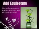 add equisetum