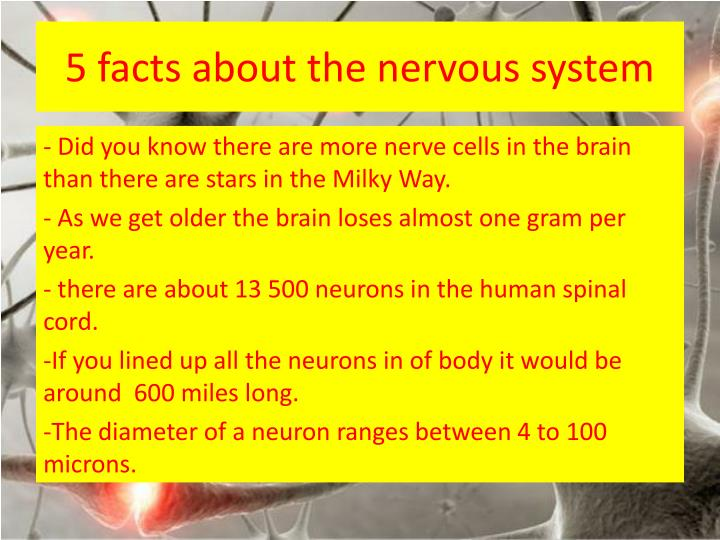 PPT - The Nervous System PowerPoint Presentation - ID:2858116