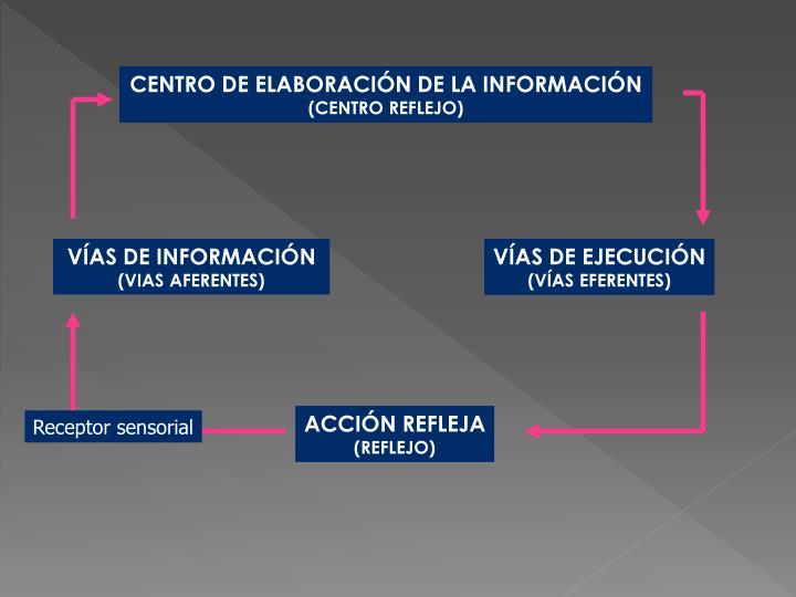 CENTRO DE ELABORACIÓN DE LA INFORMACIÓN