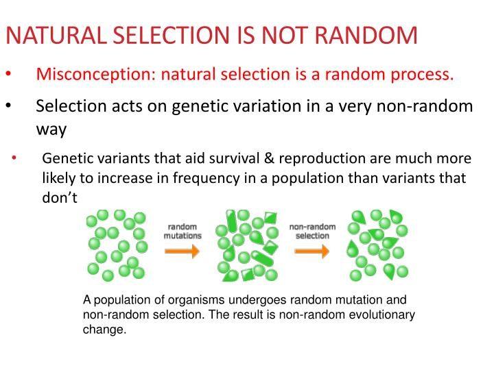 random selection and random assignment Simple random sampling (also referred to as random sampling) is the purest and the most straightforward probability sampling strategy it is also the most popular method for choosing a sample among population for a wide range of purposes.