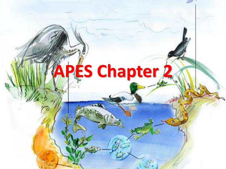 apes chapter 2 n.