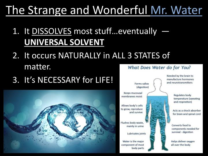 The Strange and Wonderful