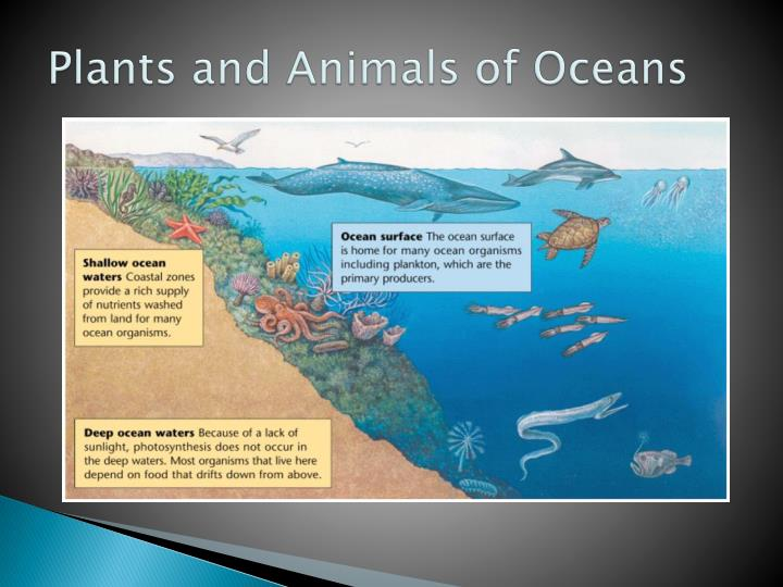 Plants and Animals of Oceans