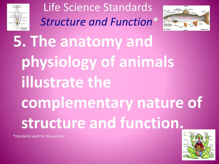 PPT - Life Science Standards Structure and Function * PowerPoint ...