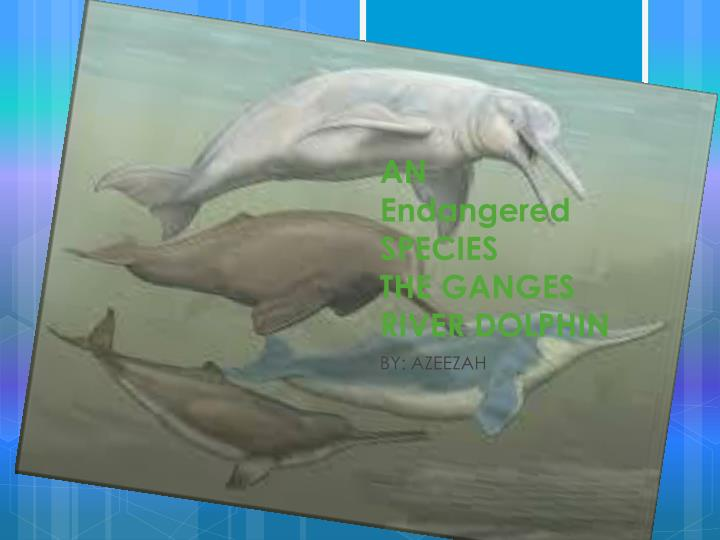 PPT - AN Endangered SPECIES THE GANGES RIVER DOLPHIN ...