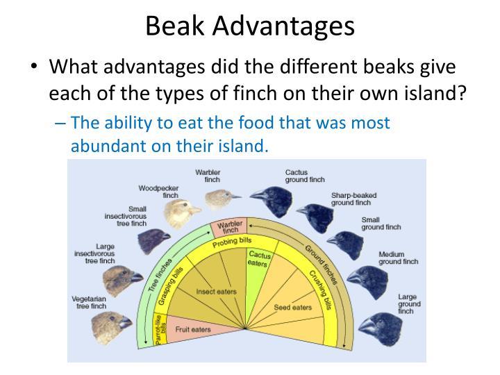 Beak Advantages