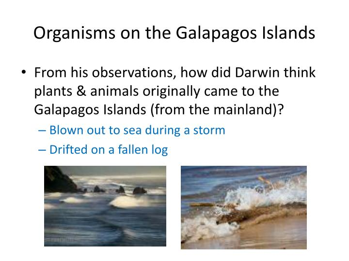 Organisms on the Galapagos Islands