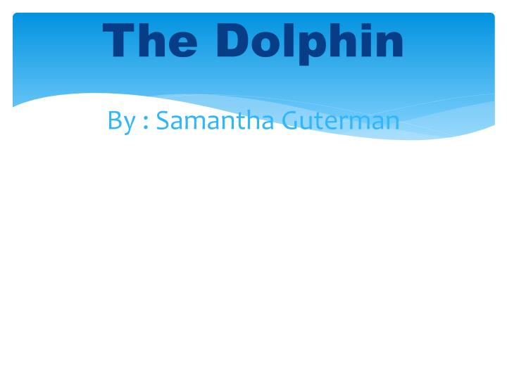the dolphin by samantha guterman n.