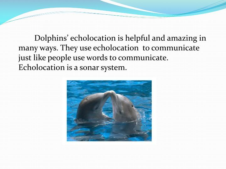 Dolphins' echolocation is helpful and amazing in many ways. They use echolocation  to communicat...
