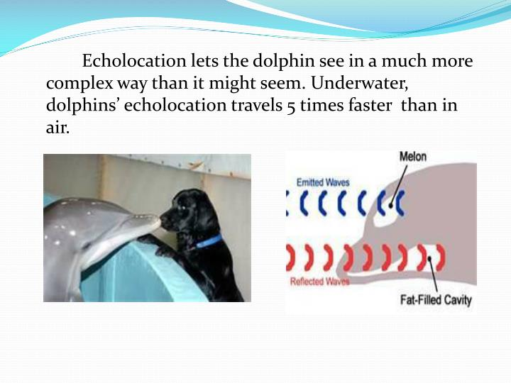 Echolocation lets the dolphin see in a much more complex way than it might seem. Underwater, dolphins' echolocation travels 5 times faster  than in air.