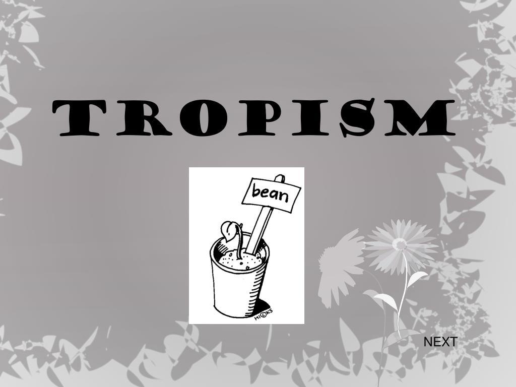 PPT - TROPISM PowerPoi...