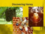 discovering honey