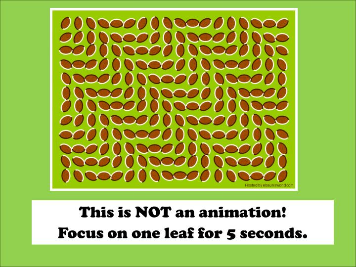 This is NOT an animation!