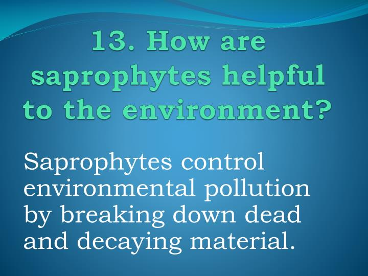13. How are saprophytes helpful to the environment?