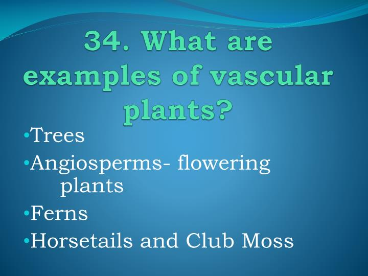 34. What are examples of vascular plants?