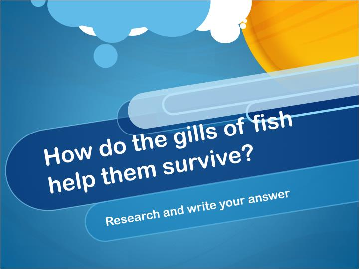How do the gills of fish help them survive