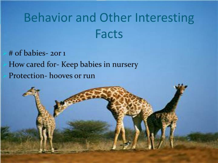 Behavior and Other Interesting Facts