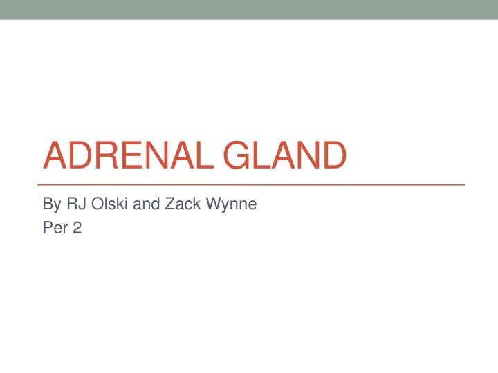 adrenal gland n.