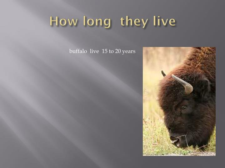 How long  they live