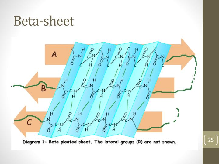 Beta-sheet