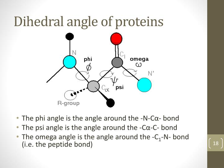Dihedral angle of proteins
