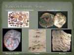 types of fossils trace