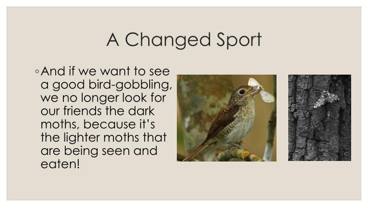 A Changed Sport