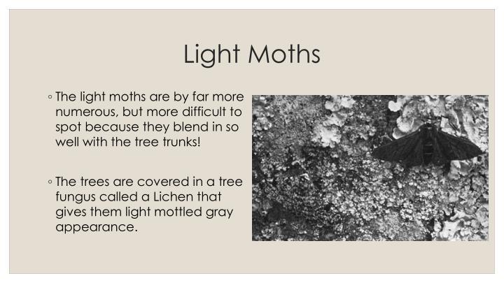 Light Moths