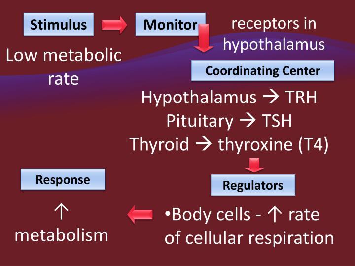 receptors in hypothalamus