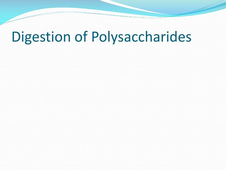 Digestion of Polysaccharides