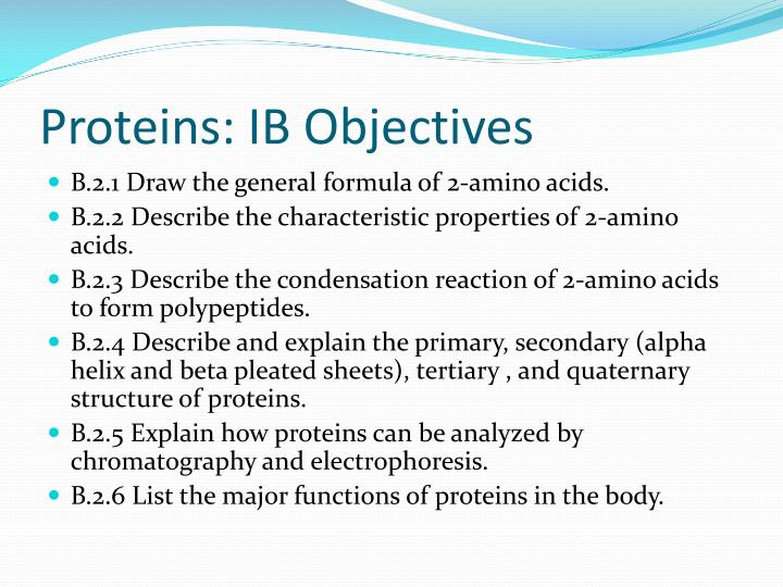 Proteins: IB Objectives