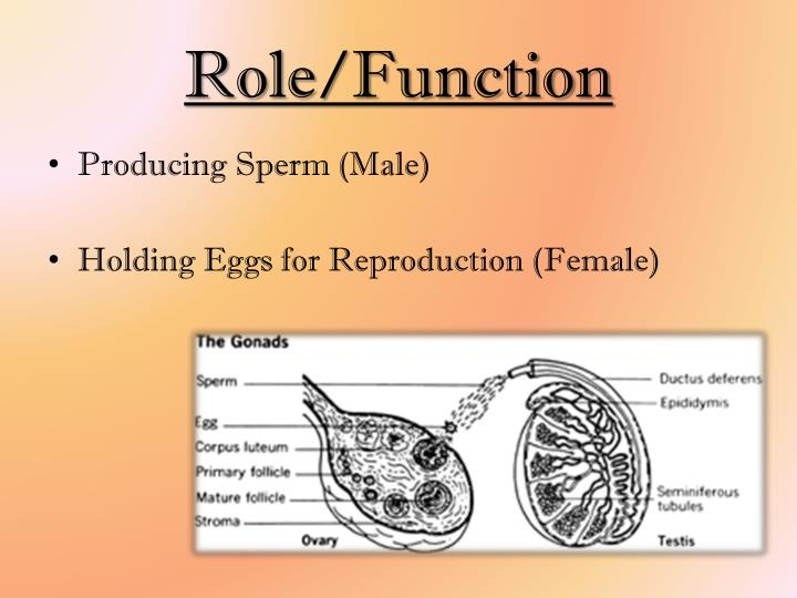 Role/Function