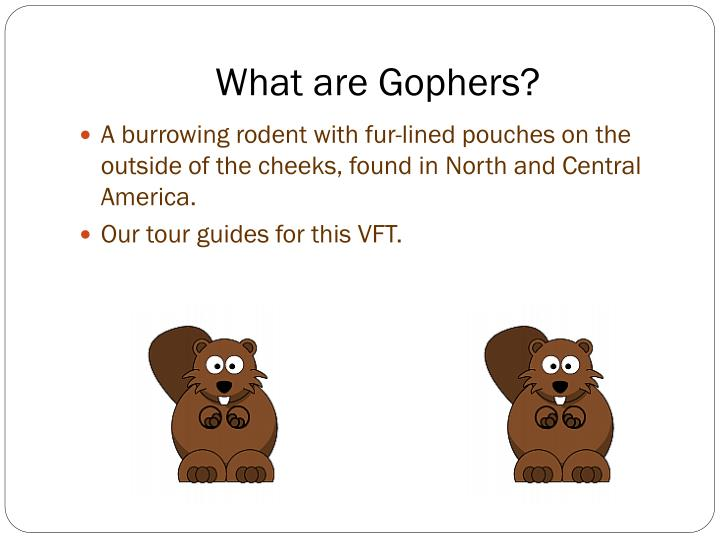 What are Gophers?
