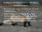 is there a recovery plan for the black footed ferret