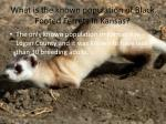 what is the known population of black footed ferrets in kansas