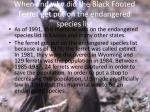 when and why did the black footed ferret get put on the endangered species list