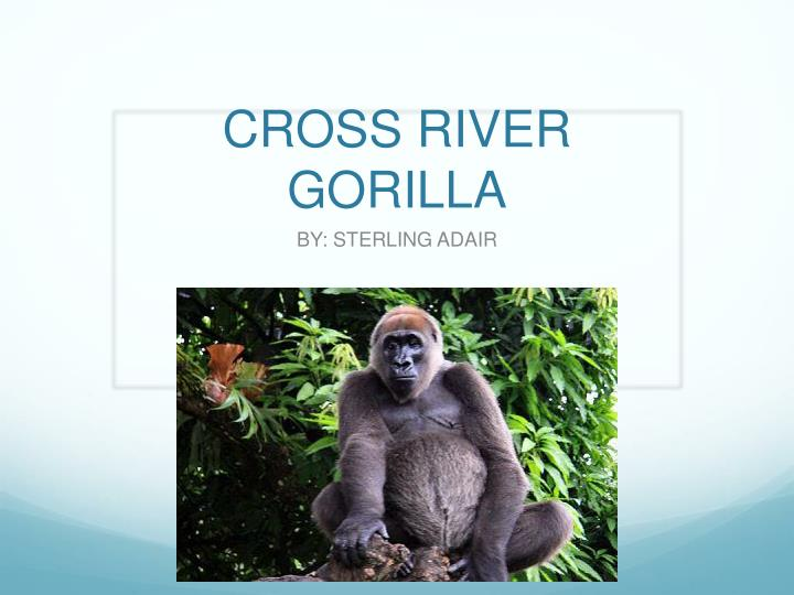cross river gorilla n.