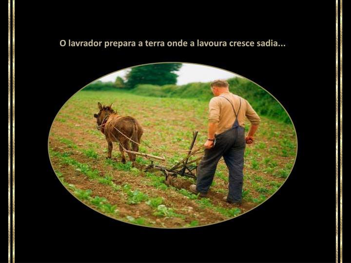 O lavrador prepara a terra onde a lavoura cresce sadia...