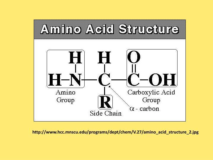 http://www.hcc.mnscu.edu/programs/dept/chem/V.27/amino_acid_structure_2.jpg