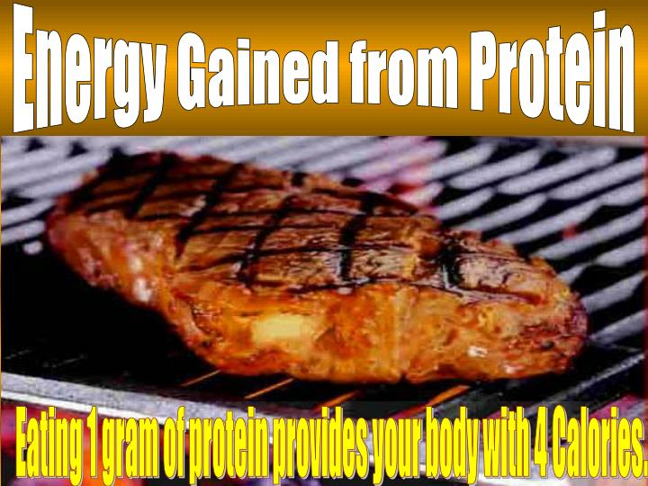 Energy Gained from Protein