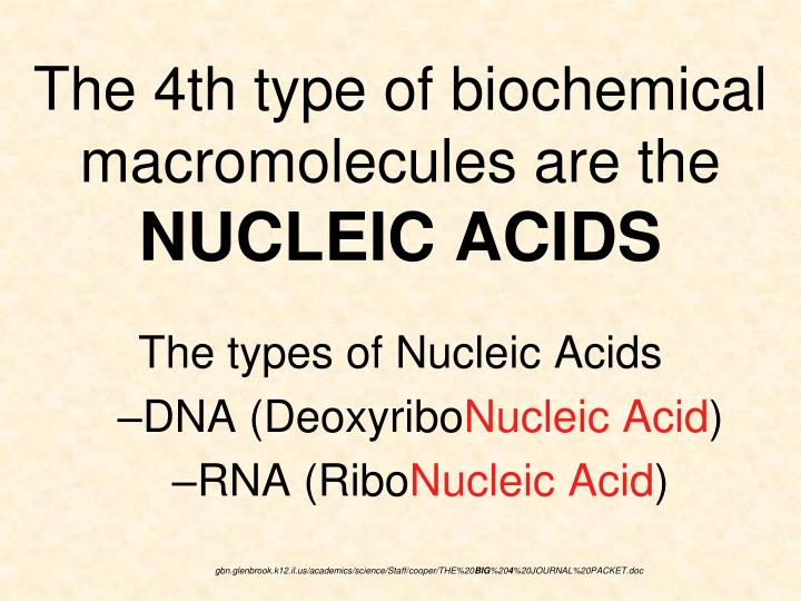 The 4th type of biochemical macromolecules are the