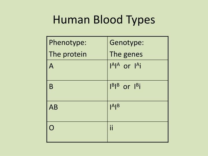 Human Blood Types