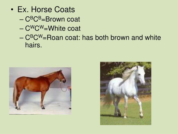 Ex. Horse Coats