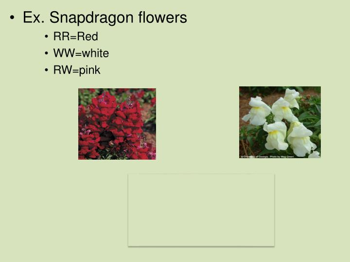 Ex. Snapdragon flowers