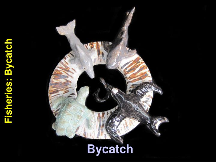 Fisheries: Bycatch